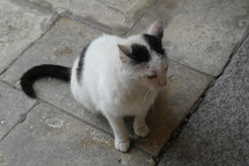 Kot zamkowy by   Ewa