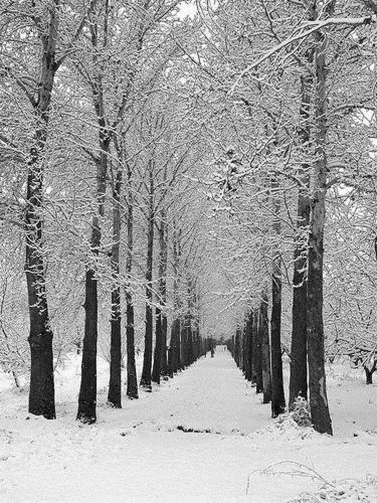 Photo in Random #in #winter