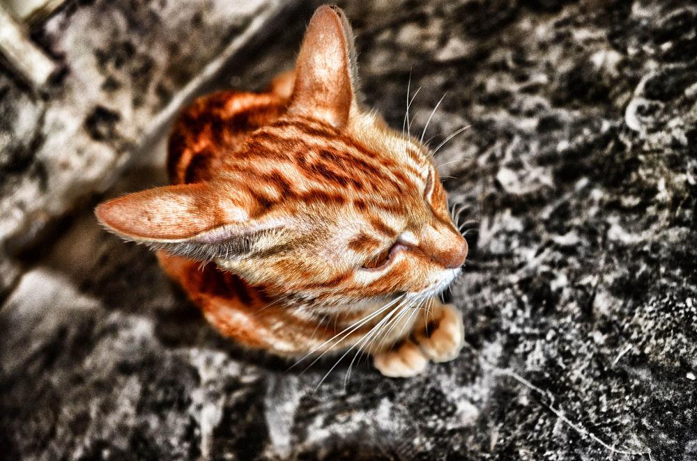 Le Cat III by Kennj
