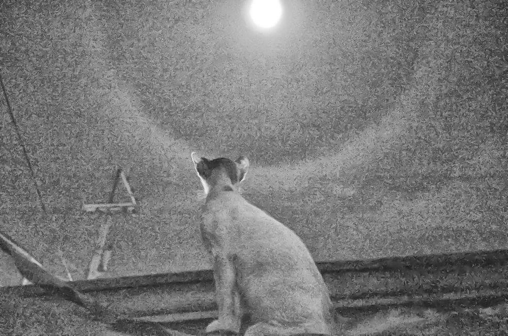 Photo in Random #nikon d5100 #cat #night #moon