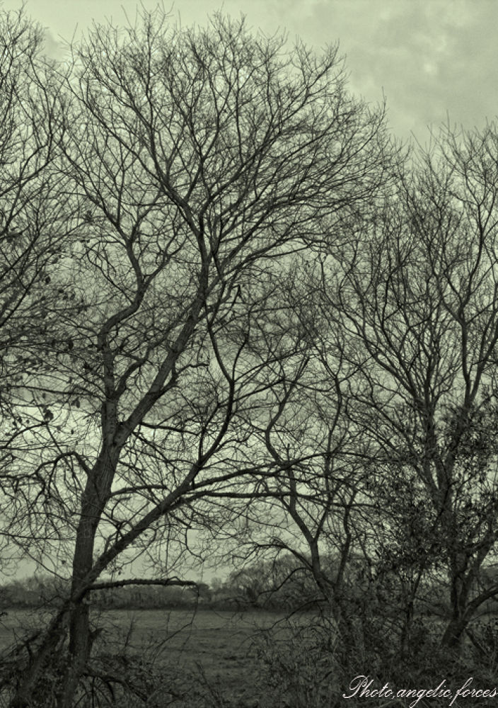 The tree is sometimes like seeing souls from people by S,J,V John Vasilopoulos