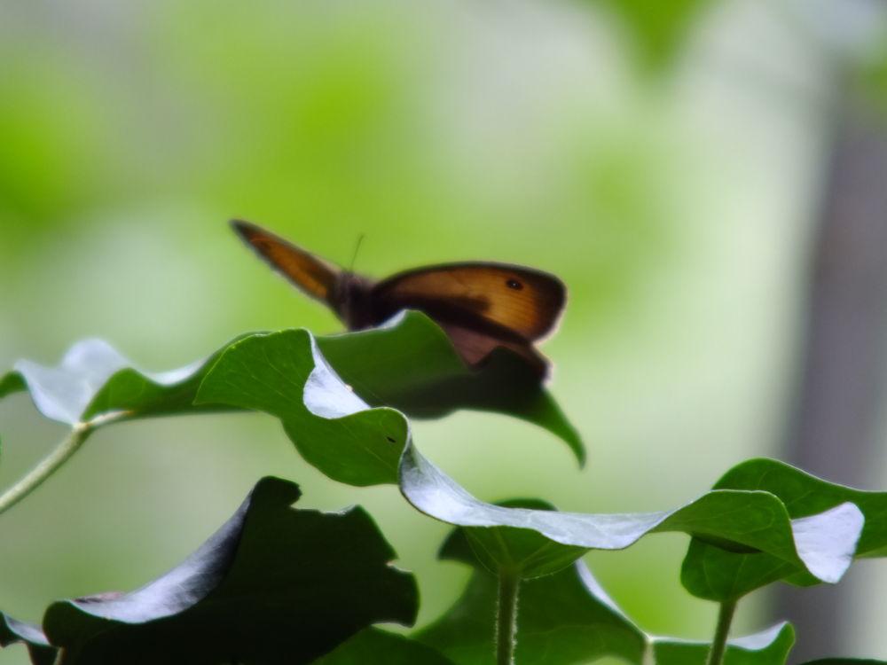 This leaf is mine by Javor