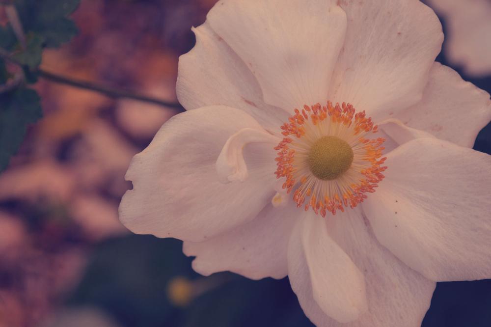 Photo in Nature #flower #autumn #nature #pretty #warm