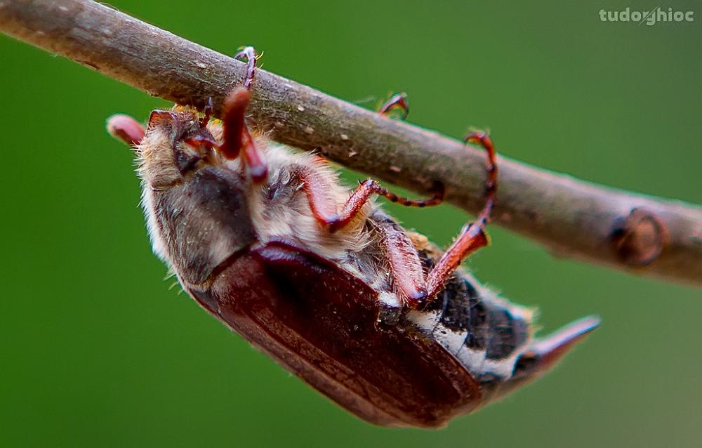 Photo in Macro #macro #life #bug #nature