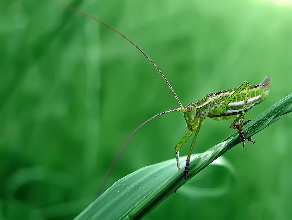 Grasshopper by djanibardoti