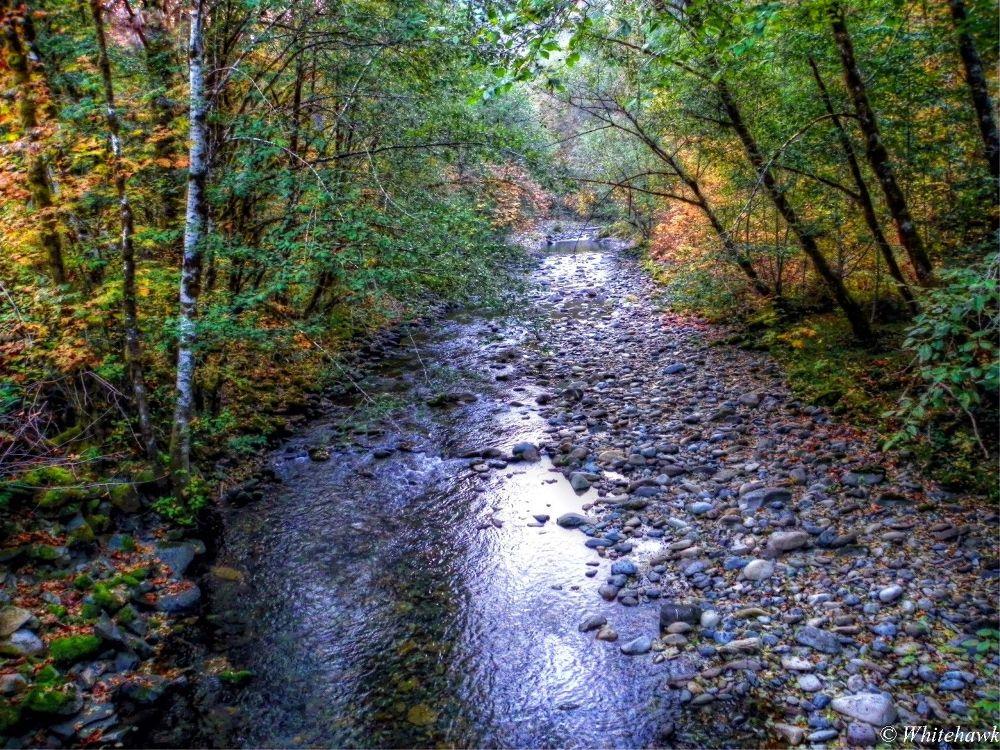 Brice Creek in  Autumn  by whitehawk