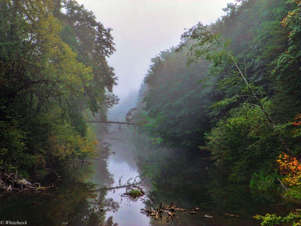 Siuslaw River  on a foggy morning by whitehawk