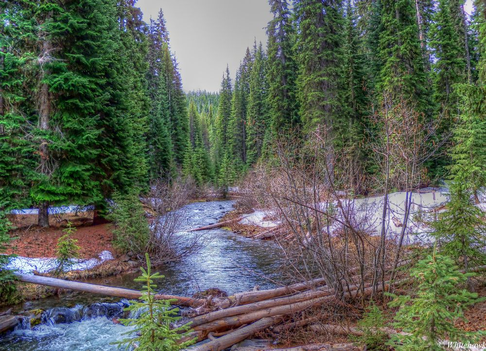 A small creek at Odell lake campground by whitehawk