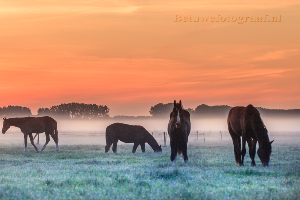 This morning in the middle of the Netherlands.... by Betuwefotograaf