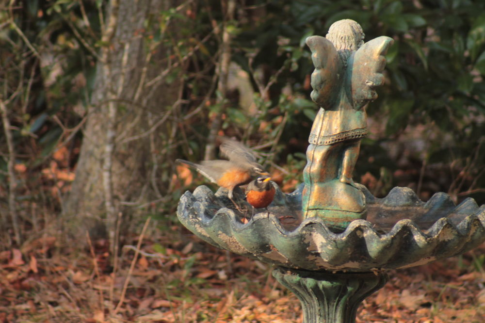 Robins by Linda L. Offen