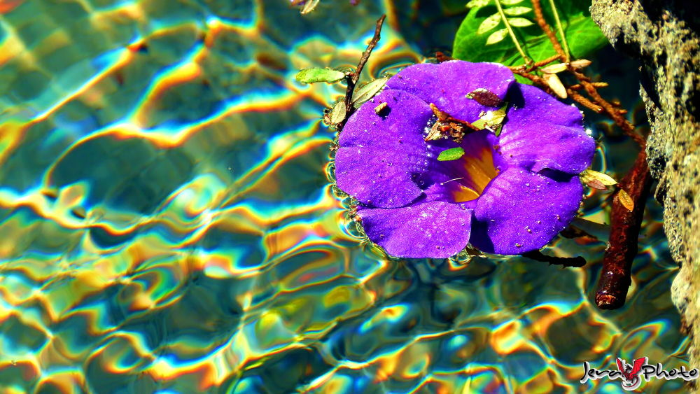 Floating ... by jamesroar