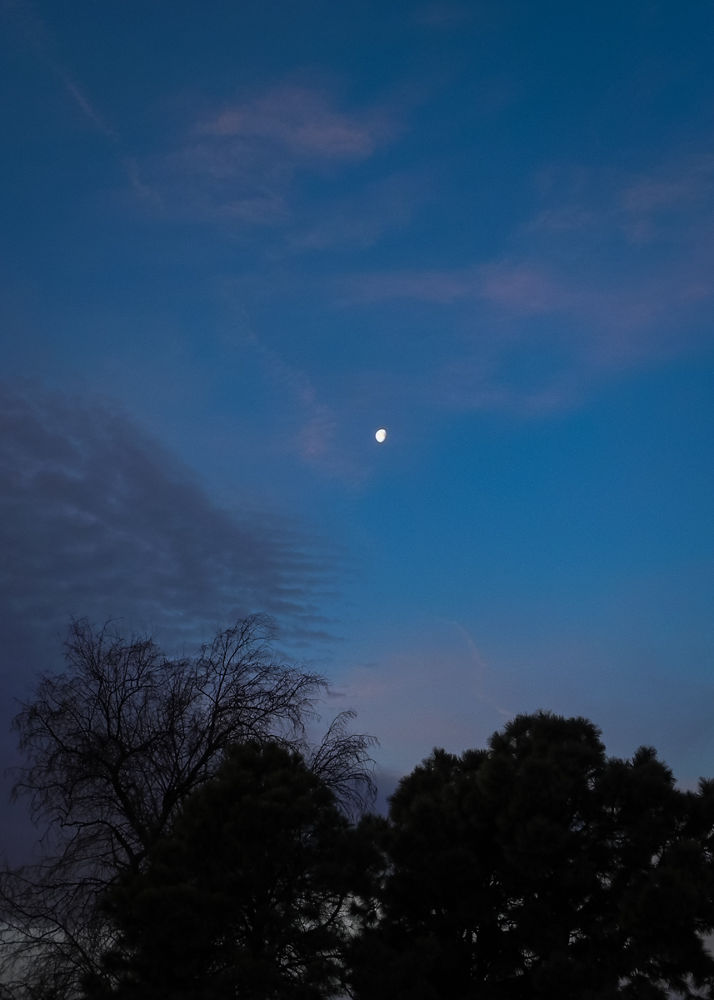 Morning Moon by Edward Hudgeons