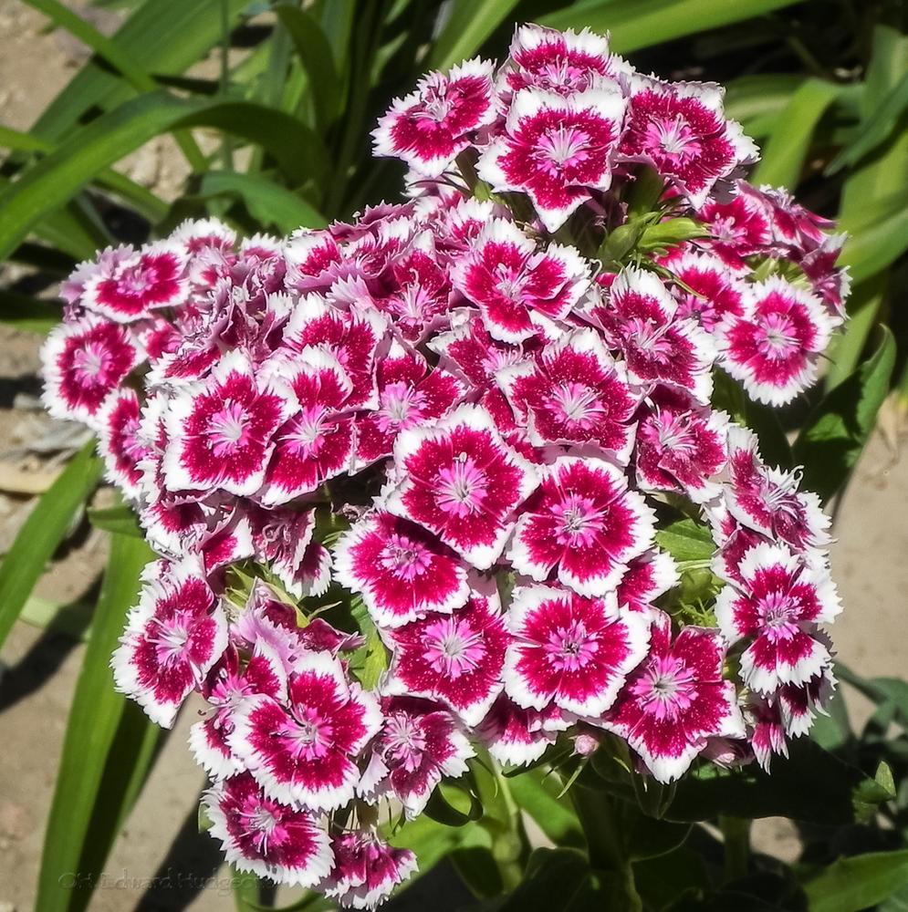 Flower-3 by Edward Hudgeons