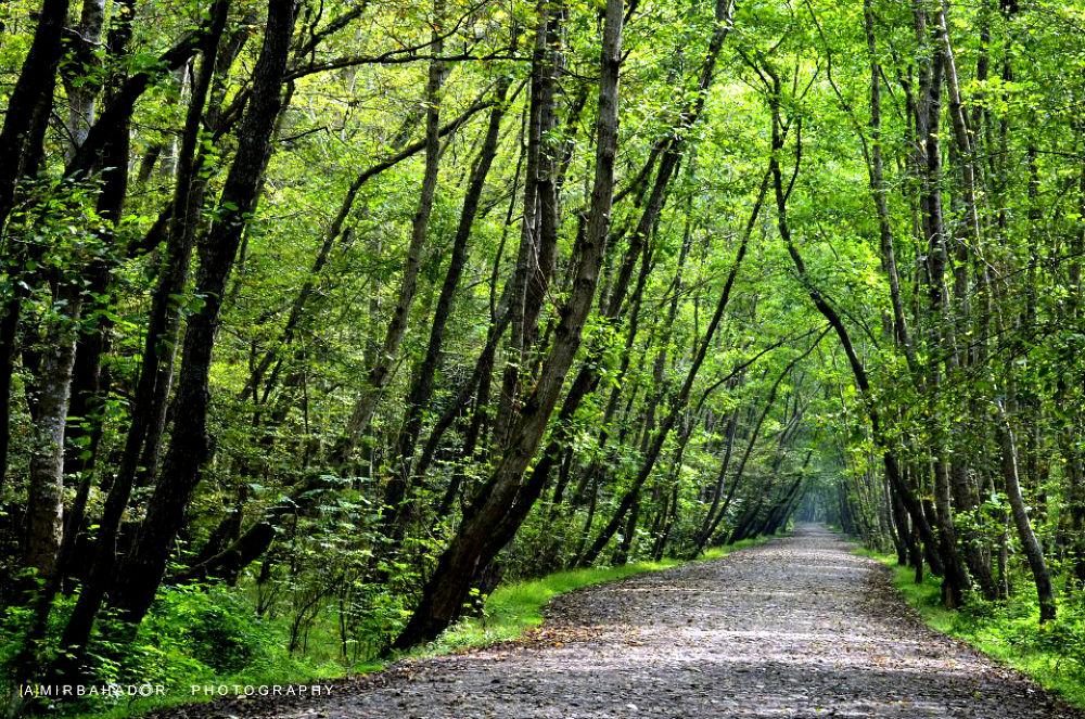 Noor forest - Mazandaran by amirbahador