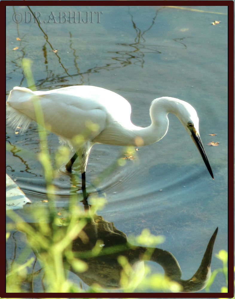 Photo in Nature #avian #nature #bird #wildlife