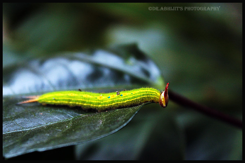 Photo in Nature #nature #wild life #macro #closeup