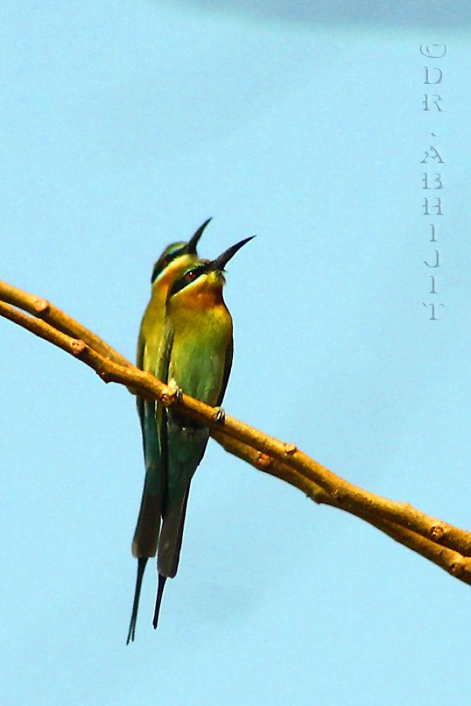 Photo in Random #nature #wild life #birds #canon #bee eater