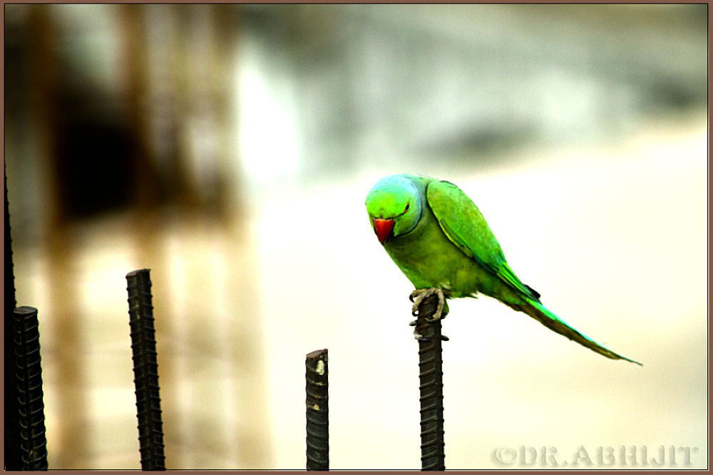 Photo in Random #nature #wild life #birds #avian #canon