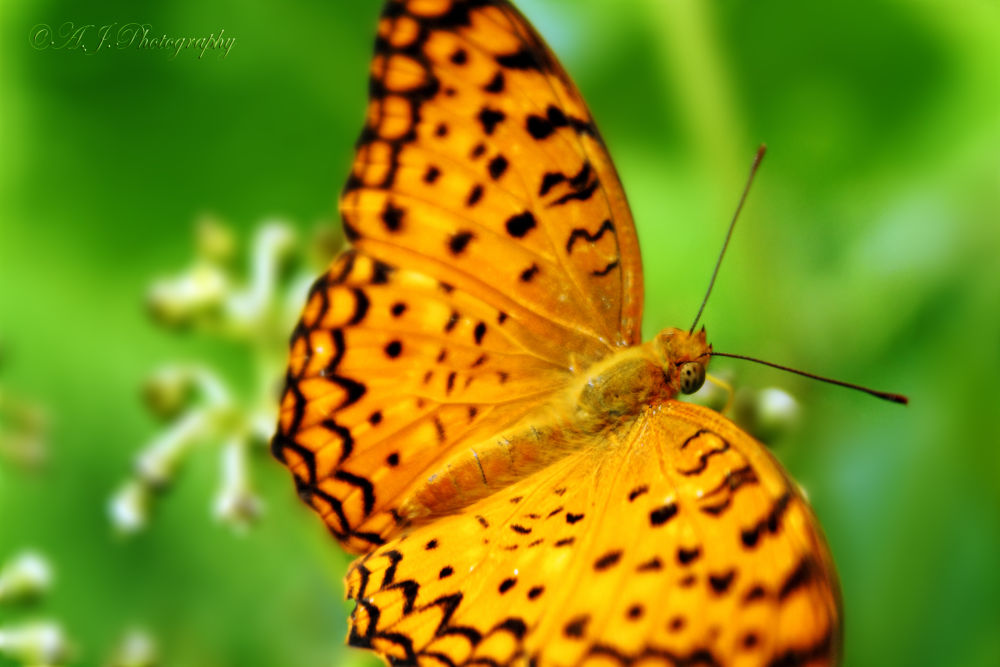Photo in Nature #nature #wild life #butterfly #canon #macro