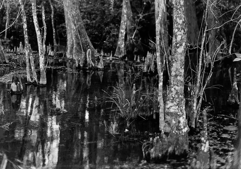 swamp2 by Terry L Mase