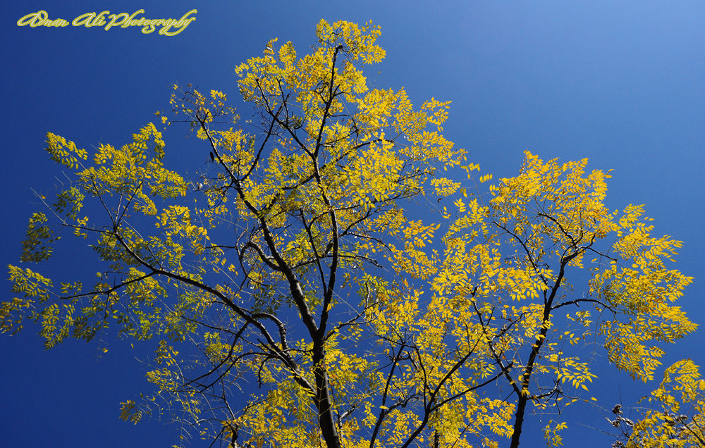 Colors of Autumn Season by adnanali