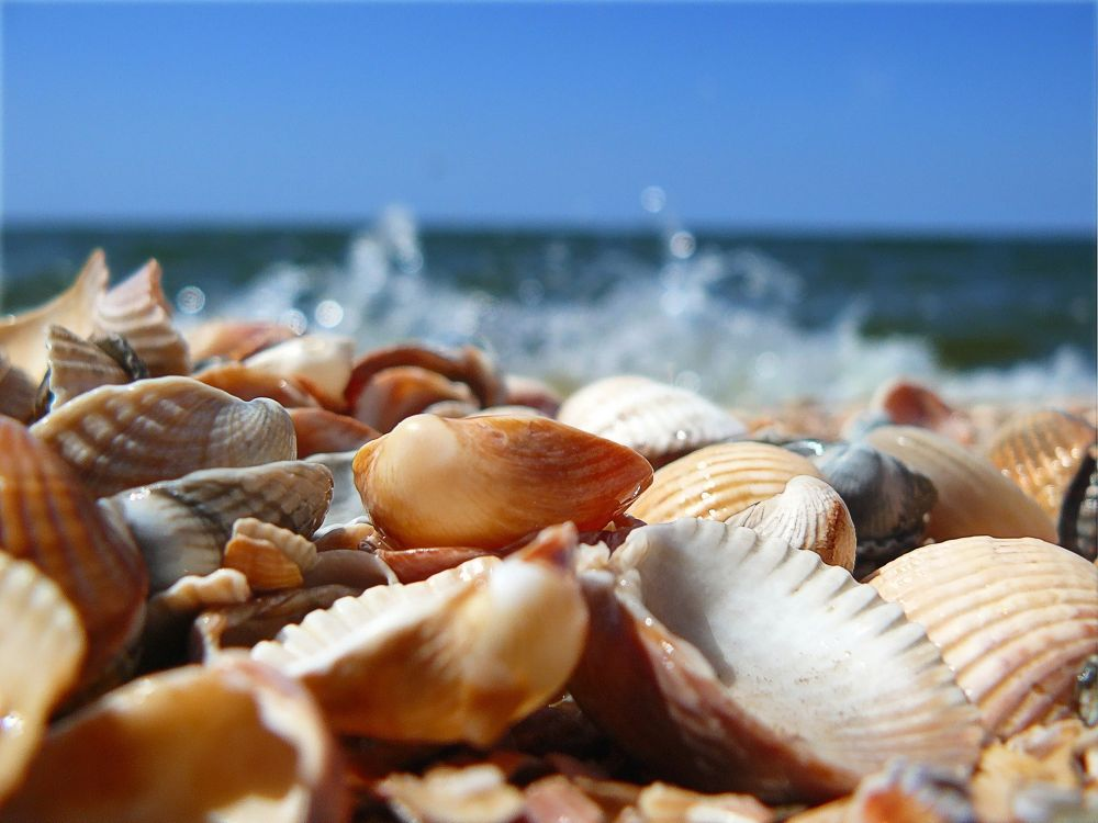 shell.jpg by Lalit