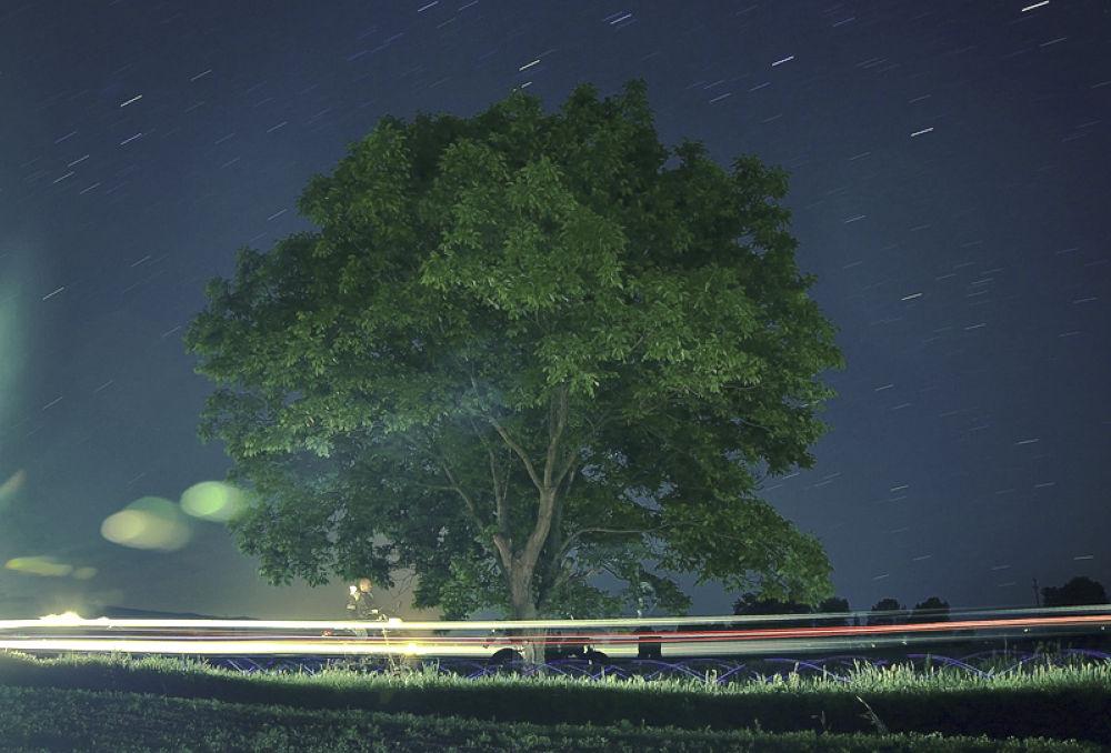 tree by Igor Djordjevic