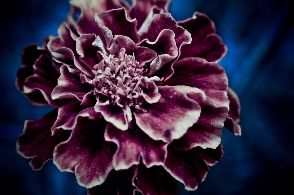 flower by Igor Djordjevic