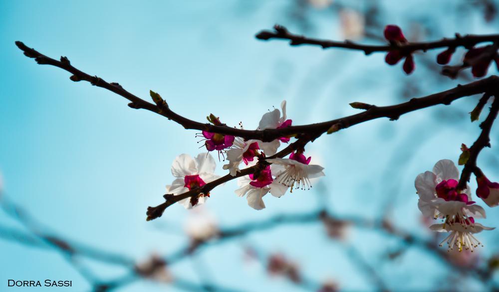 printemps  by Dorra sassi