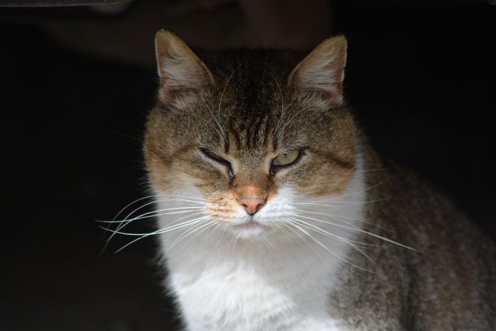 grumpy cat by Vlad Preutu