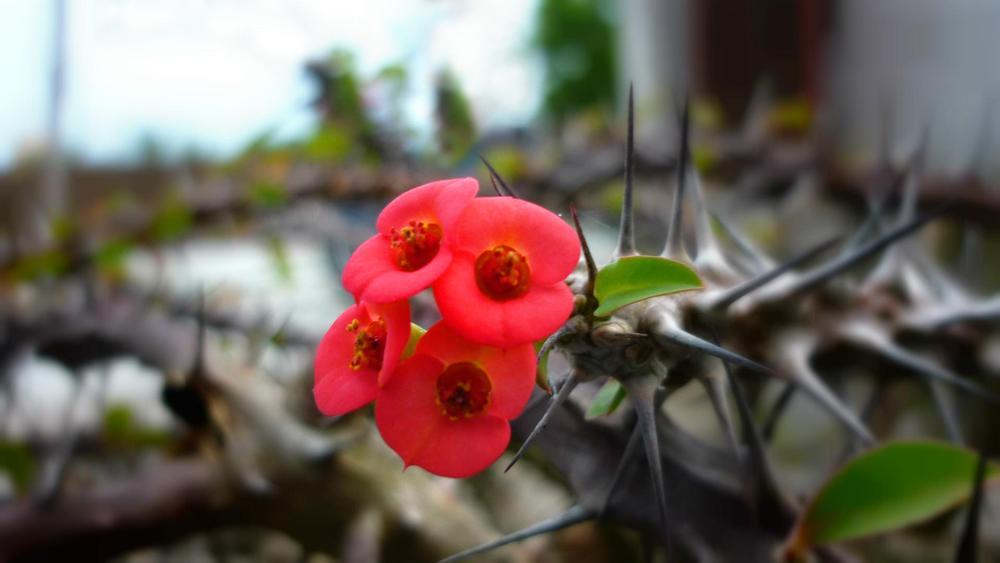 Wildflower by hasim