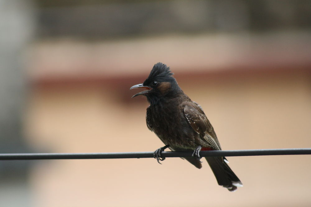 Bird by souravray