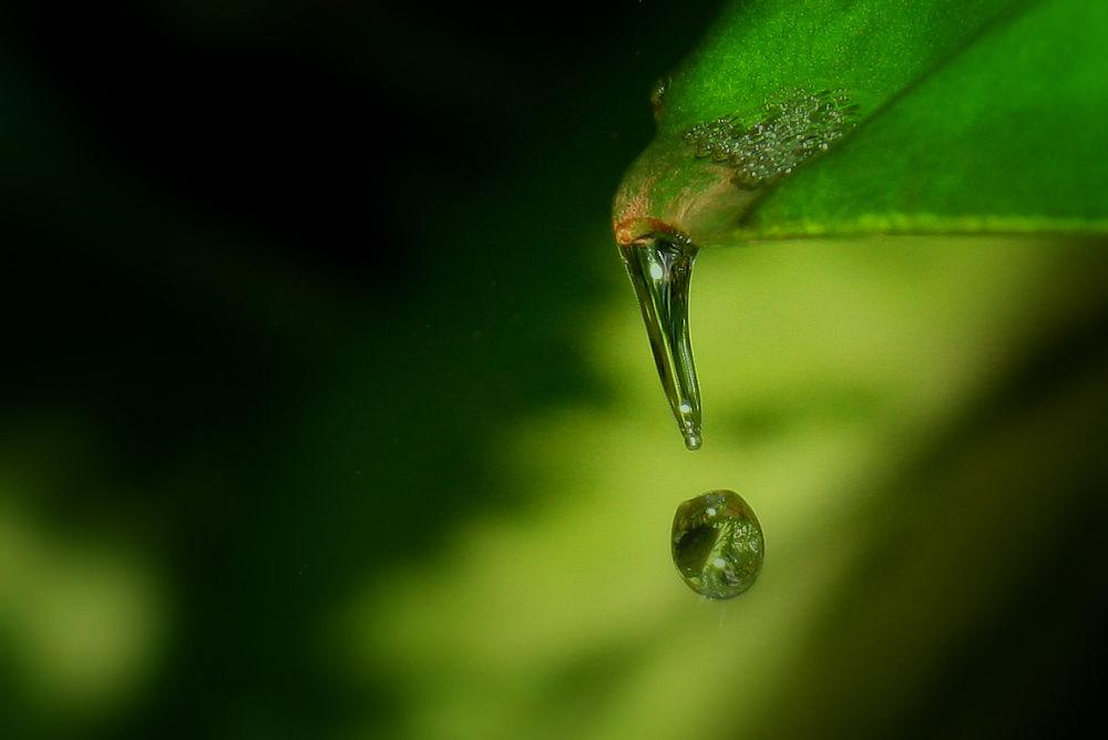 Raindrops (28)ok by Jorge Coromina