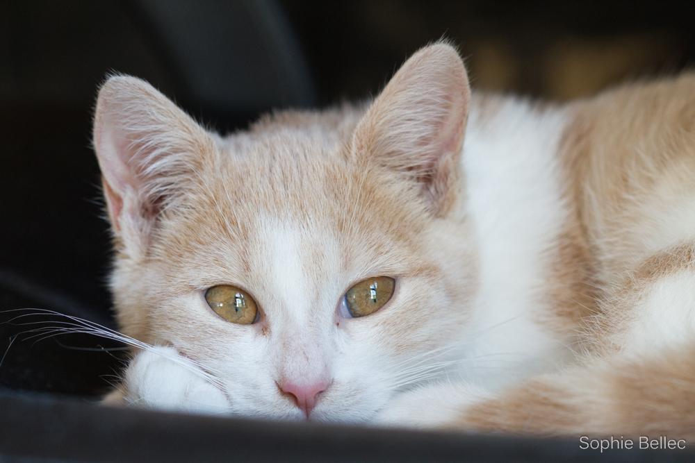 Photo in Animal #cat #prenons soin de votre image #kitten