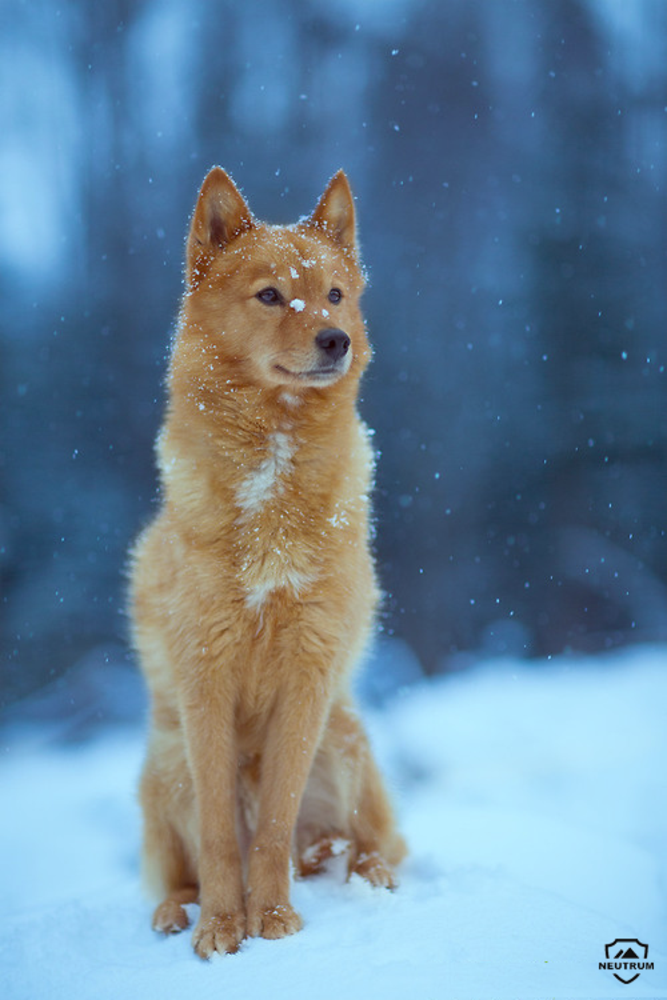 Photo in Random #winter #dog #animal #color #portrait #saturated