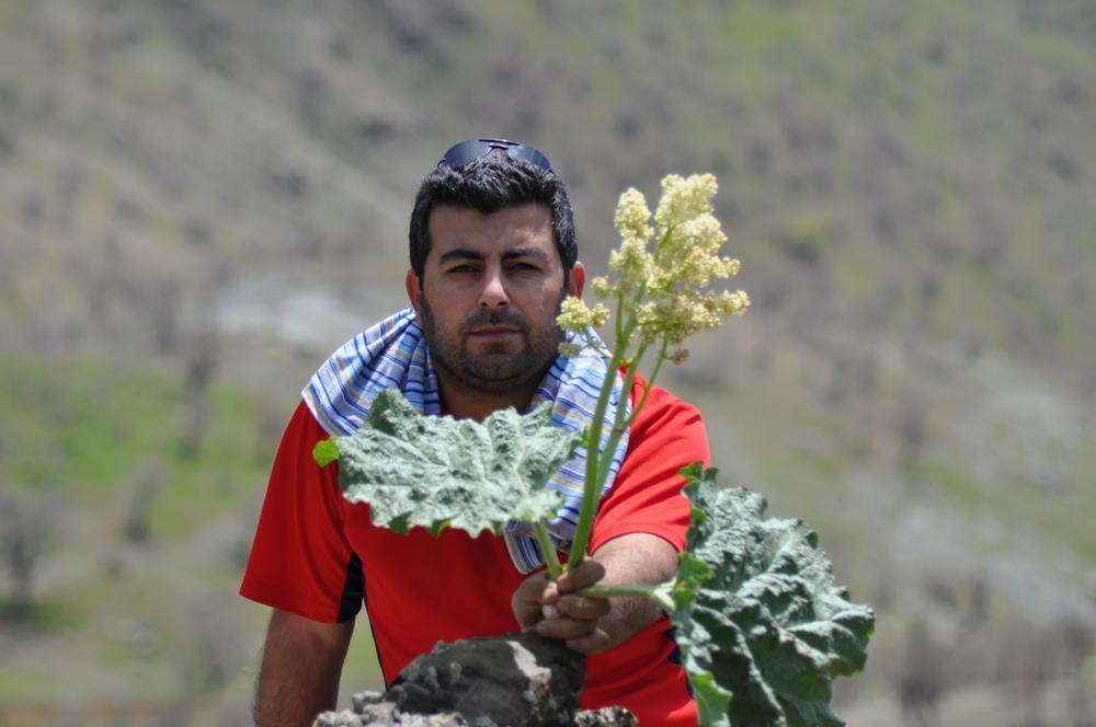 By Farman Kurdish-The fruit special in Kurdistan by Farman Kurdish