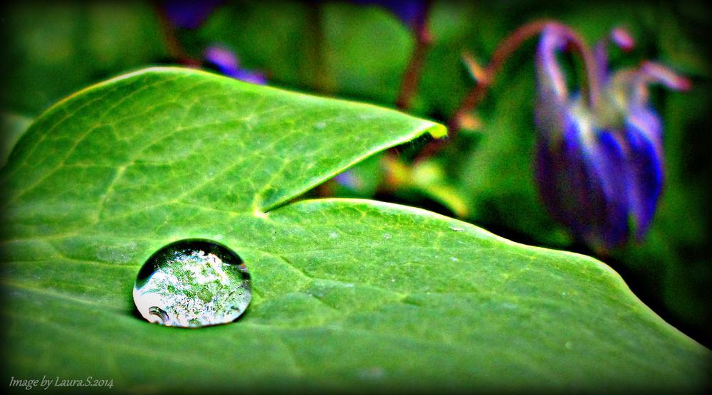 Photo in Macro #nature #raindrops #close up #art