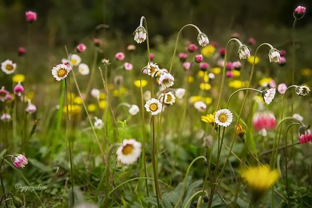 Kır Çiçekleri by İbrahim YILDIZ