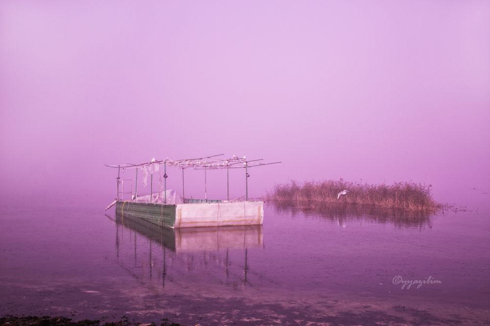 roost and fog by İbrahim YILDIZ