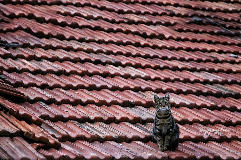 cat on the roof by İbrahim YILDIZ