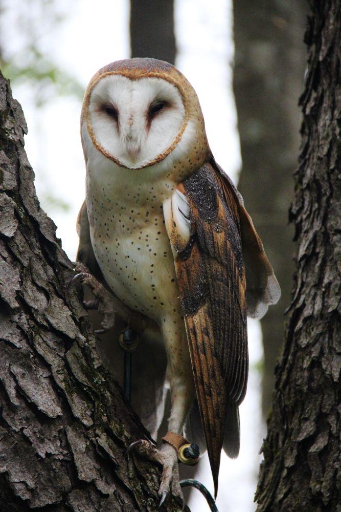 Photo in Random #wildlife #ohio #owls