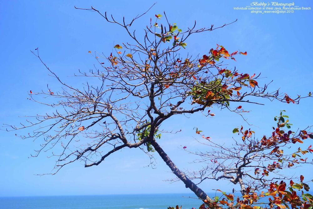 Dry Tree by BOBBYRAHMANLUBIS