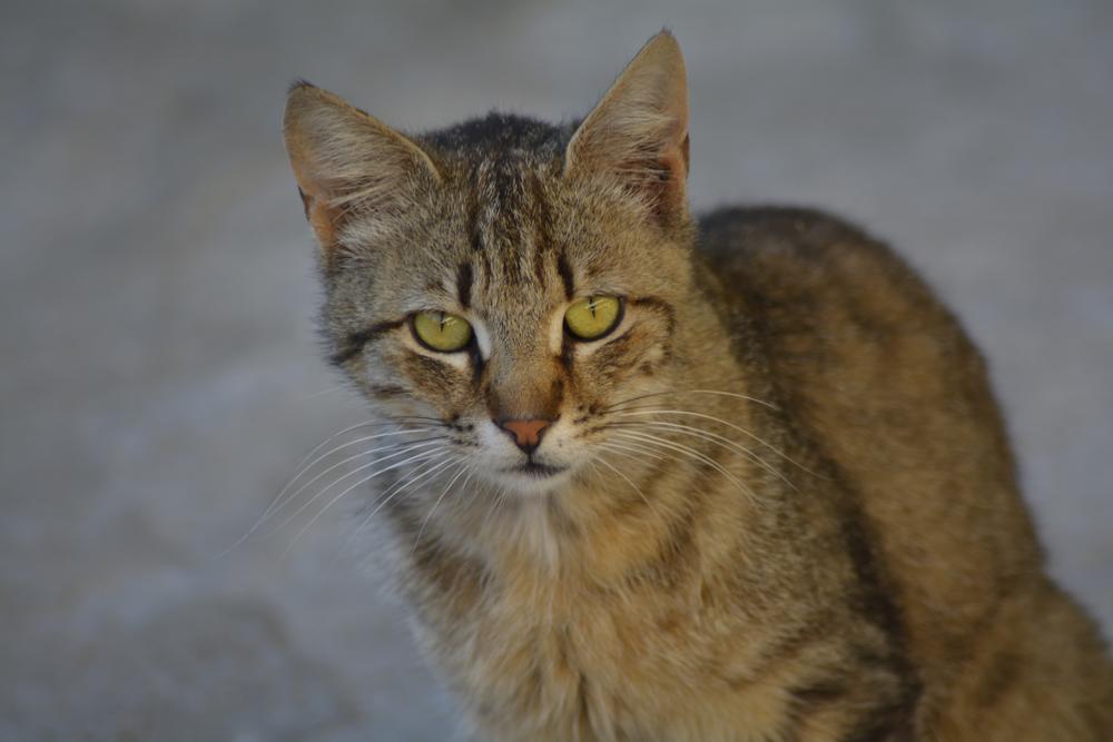 cat eyes by Marion Damigou