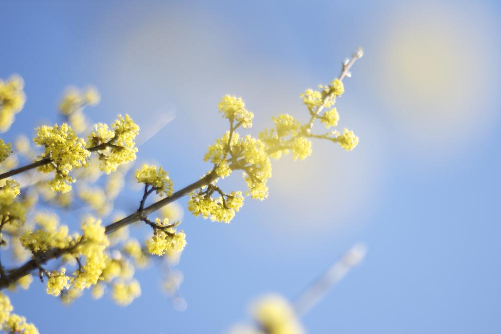 Photo in Abstract #bloom #blooming #swedish #spring #twig #blue #green #nature #tree #tomasz #wysocki #tomasz wysocki