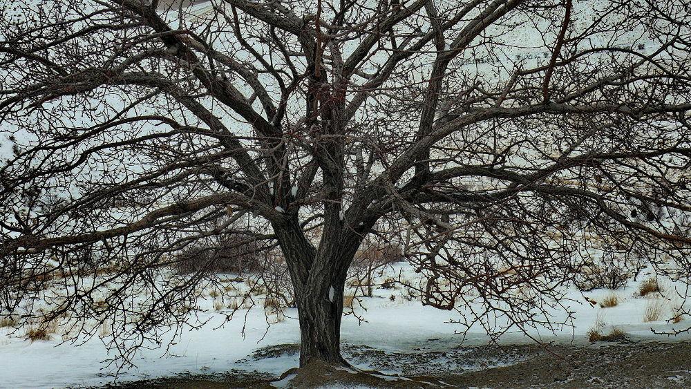 tree in snow by Ahmad Hezavei