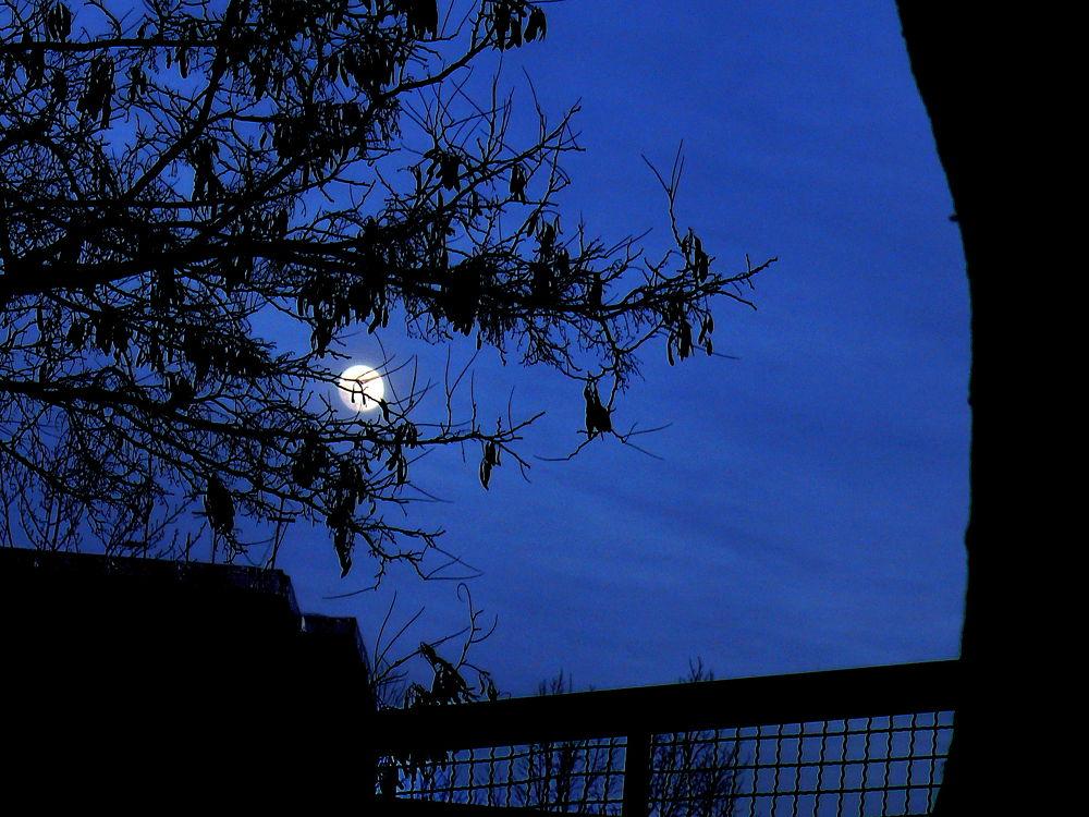Moon In The Sky by Aahmad Hezavei