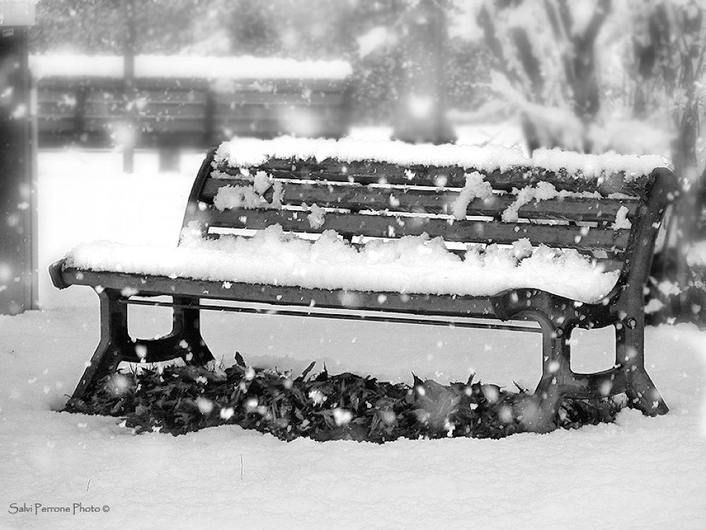 La-panchina-innevata-photo-di-Salvi-Perrone-Parco-di-Concorezzo-11-feb-2013.jpg by SalviPerrone