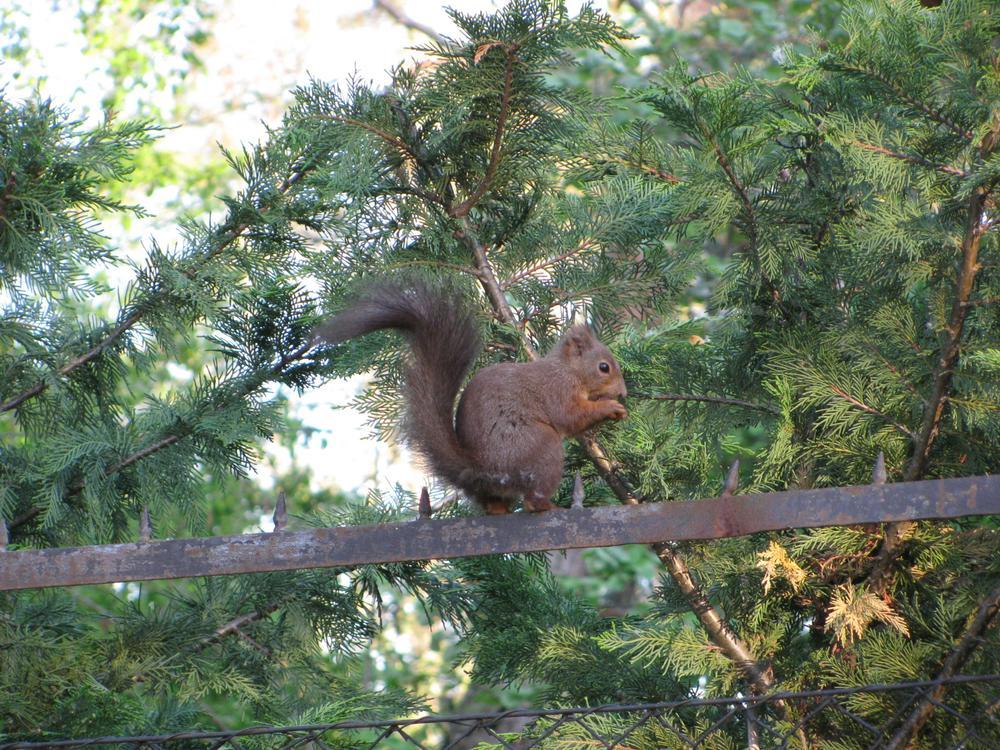 Squirrel by Bettina Bognár