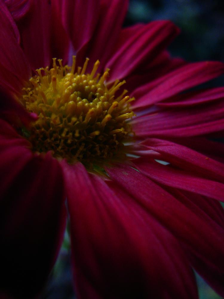 Flower by Bettina Bognár