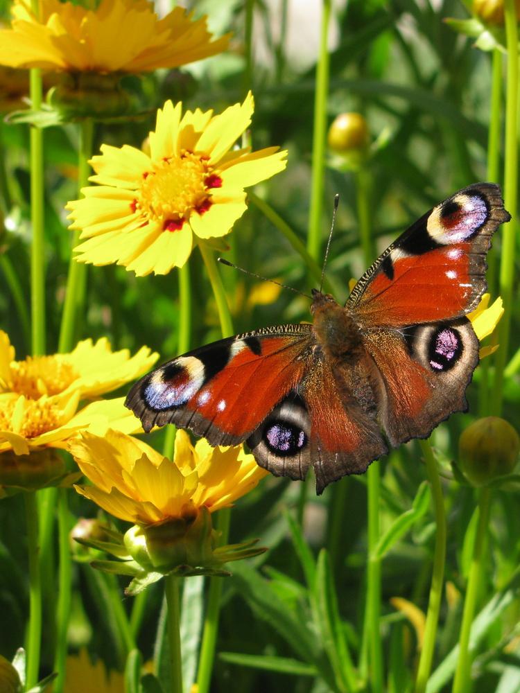 Butterfly by Bettina Bognár